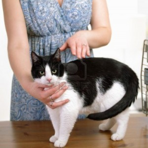 13787248-animal-reiki-therapy-cat-with-experienced-practitioner[1]